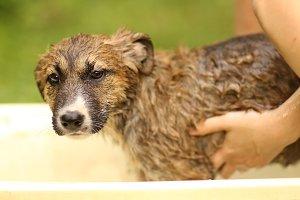 kids hand wasing puppy in bathtub