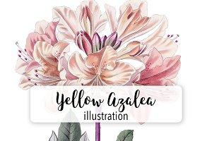 Florals: Chinese Yellow Azalea
