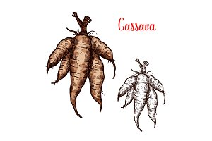 Cassava sketch tropical plant tuber