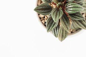 Stock Photo - Plant white background