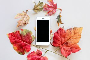Smartphone and autumn leaves