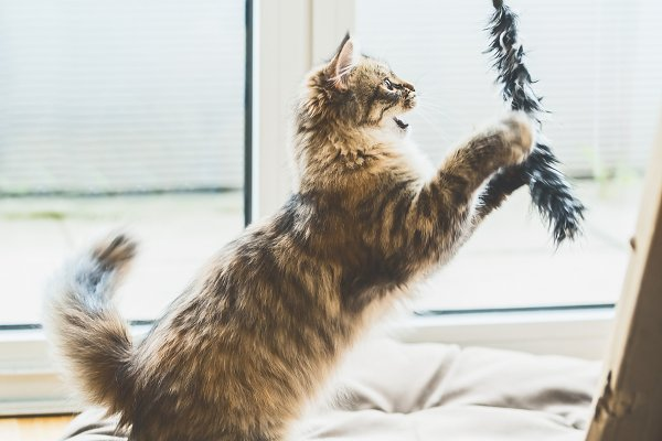 Animal Stock Photos: VICUSCHKA - Kitten jumping and catches toy