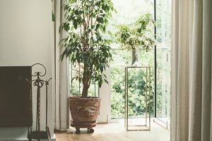 Cozy home interior plants