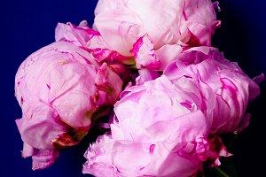 Pink peons