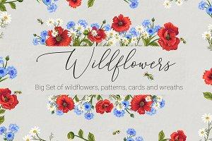 Wildflowers. Big set