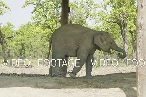 Baby elephant reaches out to mom in