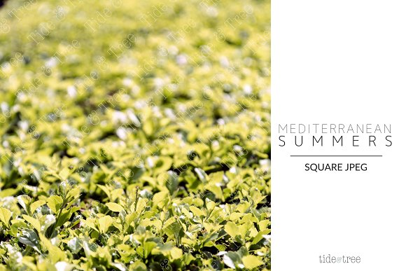 Med Summers | Square No. 21