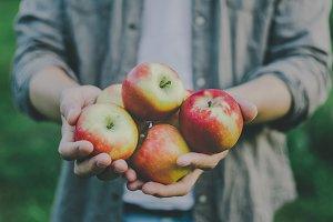 Man showing harvest fresh apples