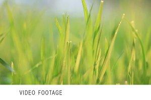 Green grass. Wind.