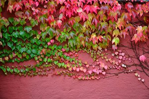 Pink wall green leaves