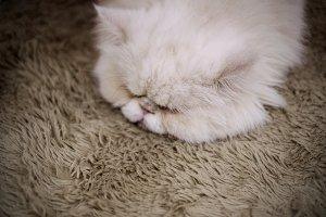Cat sleeping on the brown carpet