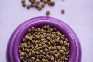 cat food on purple background