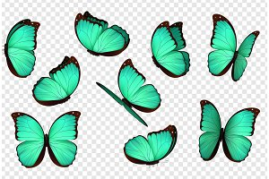 Set Butterfly blue color