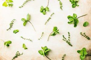Pattern of fresh green herbs