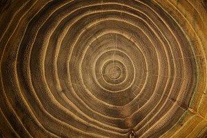 Wooden log cross section texture