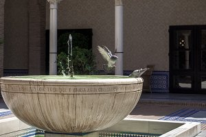 Pigeon in flight to water fountain.