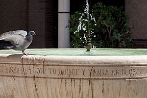 pigeon standing on a fountain