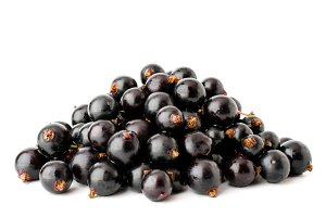 A bunch of black currants on a white