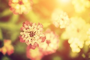Beautiful flower. Vintage