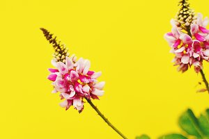 Pink Flower Bright Yellow Background