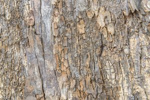 tree bark texture pattern for backgr