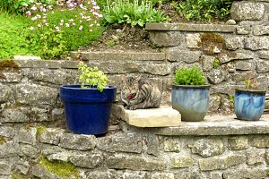 Tabby Cat and Flower Pots