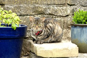 Tabby Cat in the Garden