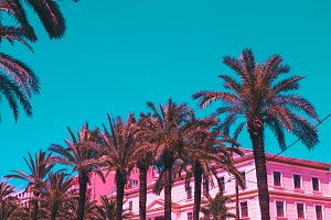 Palm trees and hotel