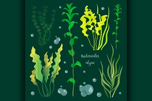 Set of underwater green sea seaweeds