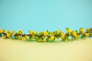 Spring blossoming barberry branch