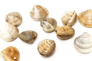 Sea clams