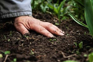 A female old hand on soil-earth. Clo