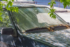 The old dirty car with leaves and