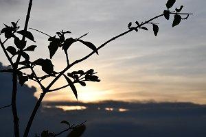 Sunset Tree Cambodia