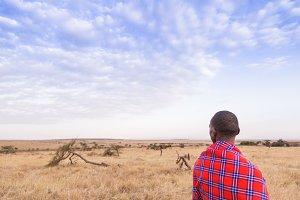 Maasai walking in the savannah at su