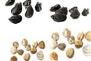 collage types of seafood and shellfi