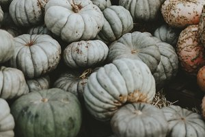 Green pumpkins in a patch