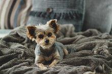 Cozy Puppy Lying on Blankets
