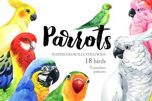 Parrots-watercolor set