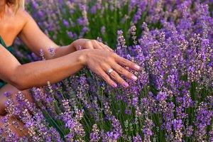 rural landscape with lavender bushes