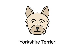 Yorkshire Terrier color icon