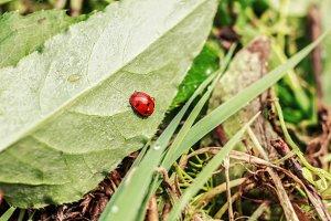 Ladybug on green sheet