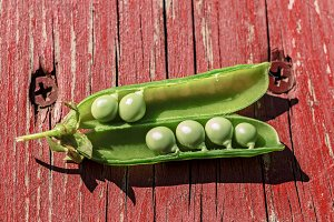 Peas in open pod