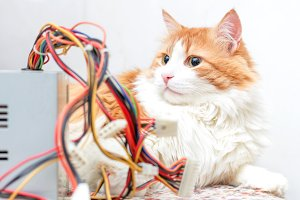 Adult cat and computer wires