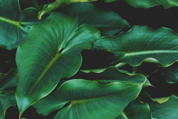 Stock Photos: René Jordaan Photography - Tropical Leaves Background