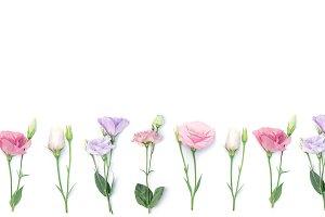 Floral frame or border of eustoma fl