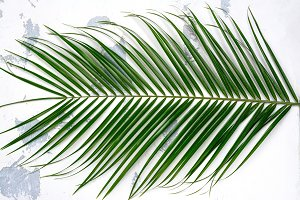 Green palm leaf on white background