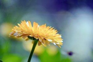 Sun,Summer,Flower