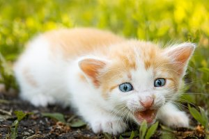 kitten on the grass
