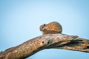 Tree squirrel sitting on a branch